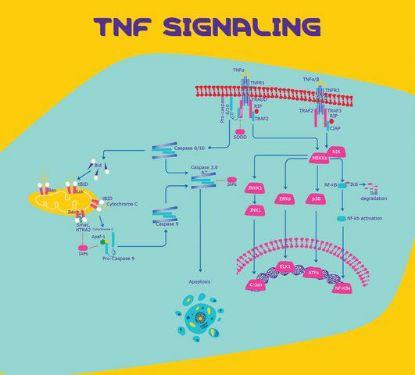 图片 人肿瘤坏死因子-α,Tumor Necrosis Factor-α human;TNF-α, recombinant, expressed in E. coli, powder, suitable for cell culture, ≥97% (SDS-PAGE)
