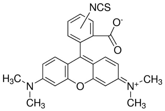 图片 异硫氰酸四甲基罗丹明混合异构体,Tetramethylrhodamine isothiocyanate mixed isomers [MRITC, TRITC];suitable for fluorescence, mixture of isomers
