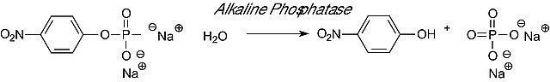 图片 碱性磷酸酶,Phosphatase, Alkaline from Escherichia coli;lyophilized powder, 30-60 units/mg protein (in glycine buffer)