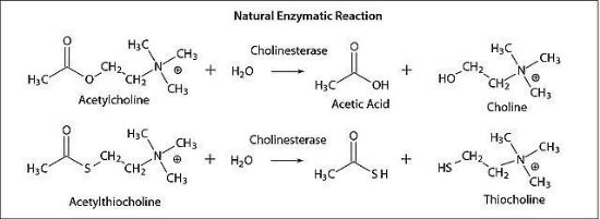 图片 乙酰胆碱酯酶来源于人类红细胞 [AChE],Acetylcholinesterase from human erythrocytes;buffered aqueous solution, ≥500 units/mg protein (BCA)