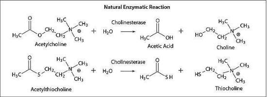 图片 乙酰胆碱酯酶来源于人 [AChE],Acetylcholinesterase human;recombinant, expressed in HEK 293 cells, lyophilized powder, ≥1,000 units/mg protein (Lowry)