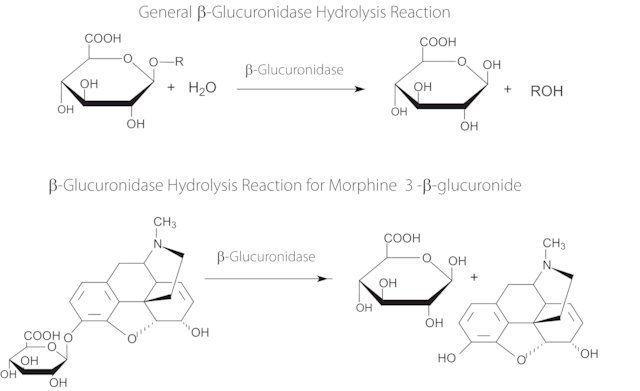 图片 β-葡萄糖醛酸酶来源于罗曼蜗牛,β-Glucuronidase from Helix pomatia;Type H-5, lyophilized powder, ≥400,000 units/g solid