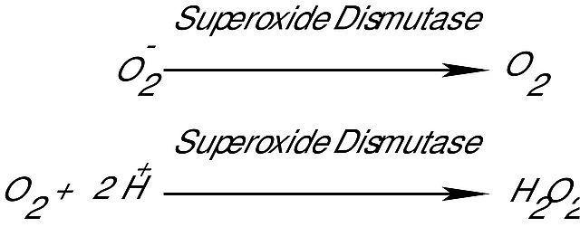 图片 超氧化物歧化酶来源于牛红细胞,Superoxide Dismutase from bovine erythrocytes [SOD];lyophilized powder, ≥3,000 units/mg protein