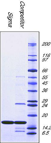 图片 超氧化物歧化酶来源于牛红细胞,Superoxide Dismutase from bovine erythrocytes [SOD];BioUltra, lyophilized powder, ≥4,500 units/mg protein, ≥97% (SDS-PAGE)
