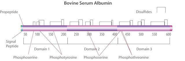 图片 牛血清白蛋白 [BSA],Bovine Serum Albumin;lyophilized powder, Protease, essentially free, ≥98% (agarose gel electrophoresis)