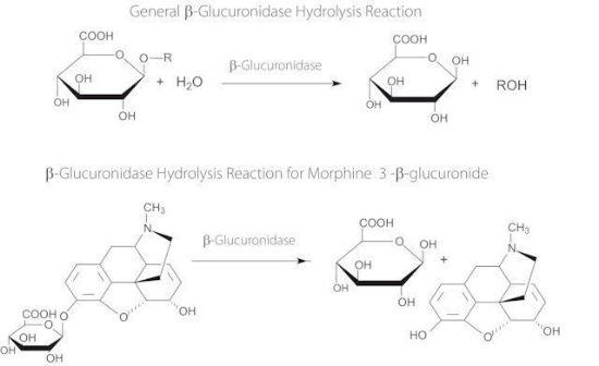 图片 β-葡萄糖醛酸酶来源于大肠杆菌,β-Glucuronidase from Escherichia coli;Type IX-A, lyophilized powder, 1,000,000-5,000,000 units/g protein (30 min assay)
