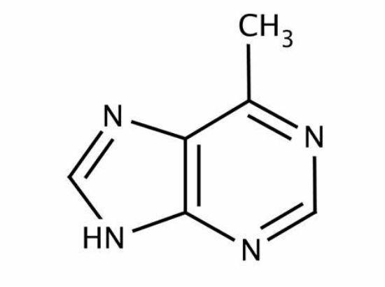图片 6-甲基嘌呤,6-Methylpurine [MeP];≥99%